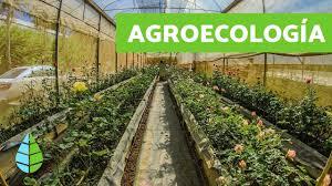 Los 7 principios de la agroecología