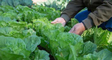 La Agroecología como política de salud pública