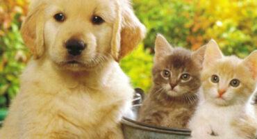 """Cuidar bien o """"humanizar"""" nuestras mascotas"""